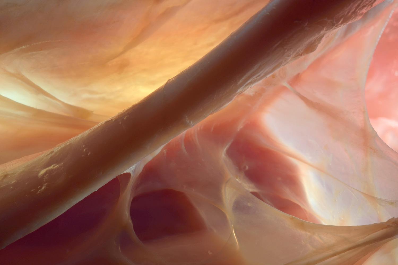 Sehne mit verschiedenen Faszienschichten, darunter Muskel (Rind)